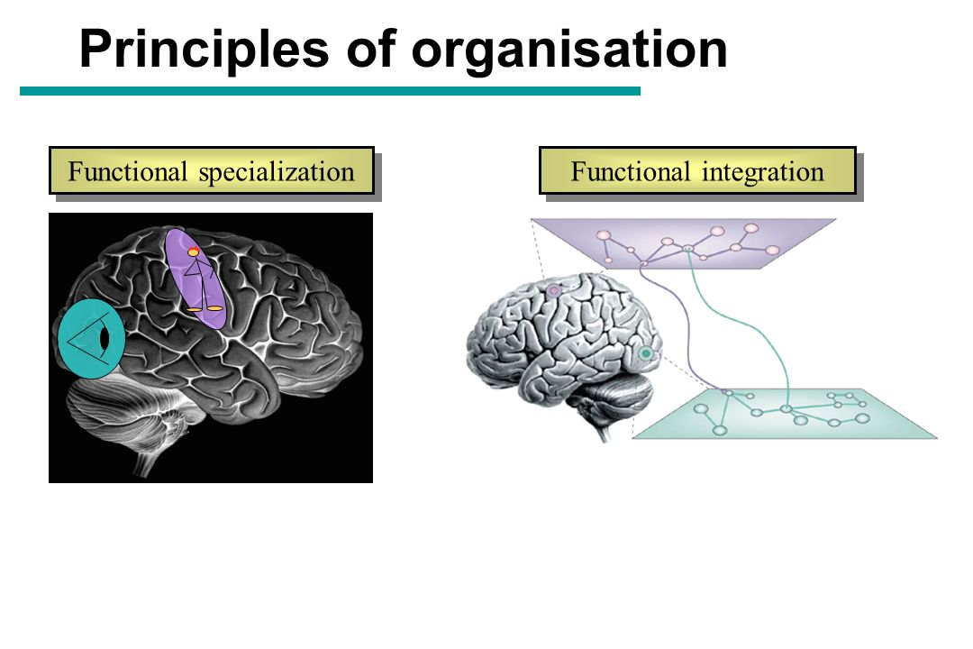 Principles of organisation