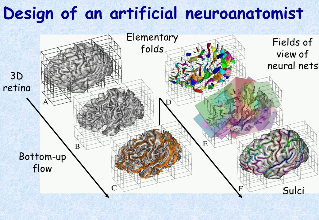 Design of an artificial neuroanatomist