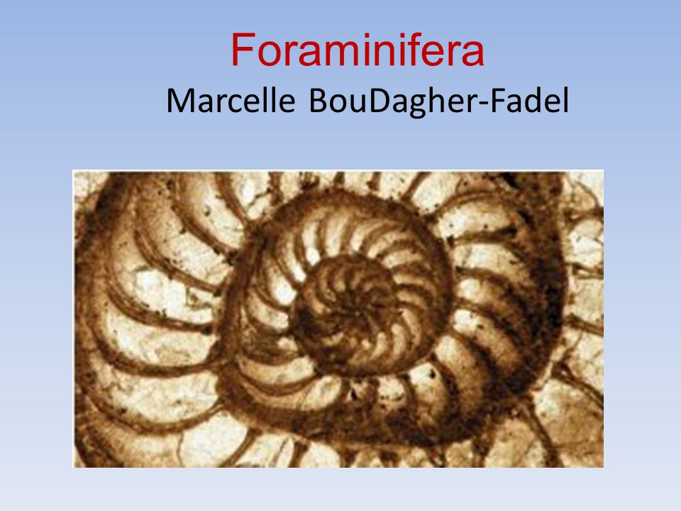 Foraminifera Marcelle BouDagher-Fadel