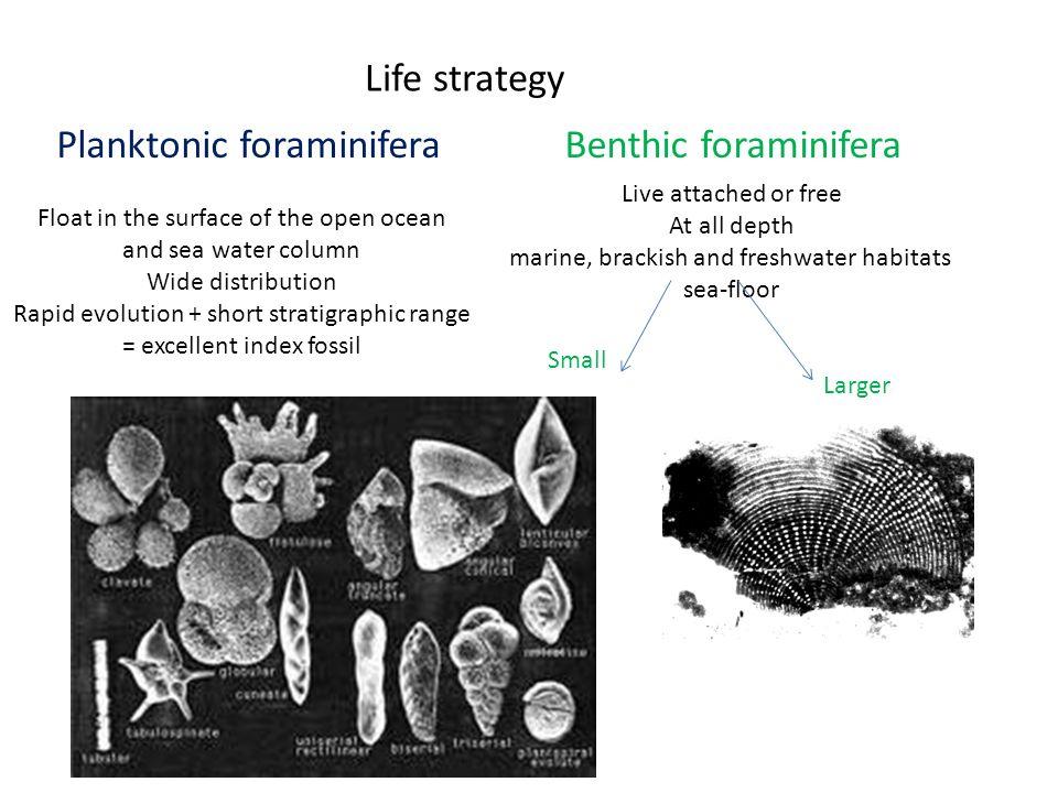 Planktonic foraminifera Benthic foraminifera