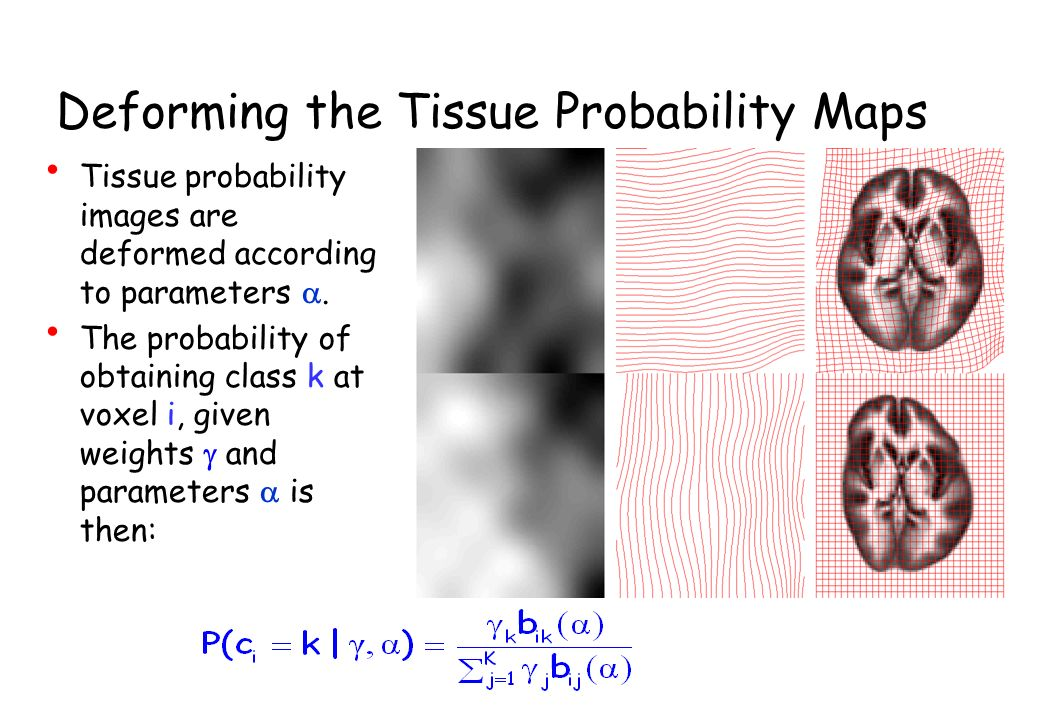 Deforming the Tissue Probability Maps