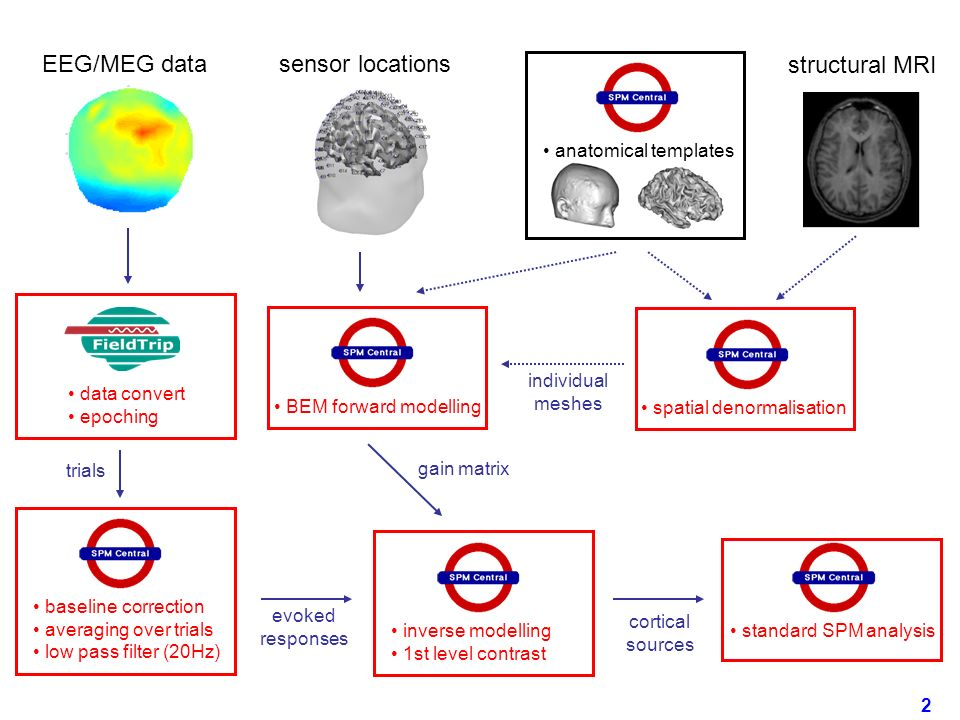 EEG/MEG data sensor locations structural MRI anatomical templates