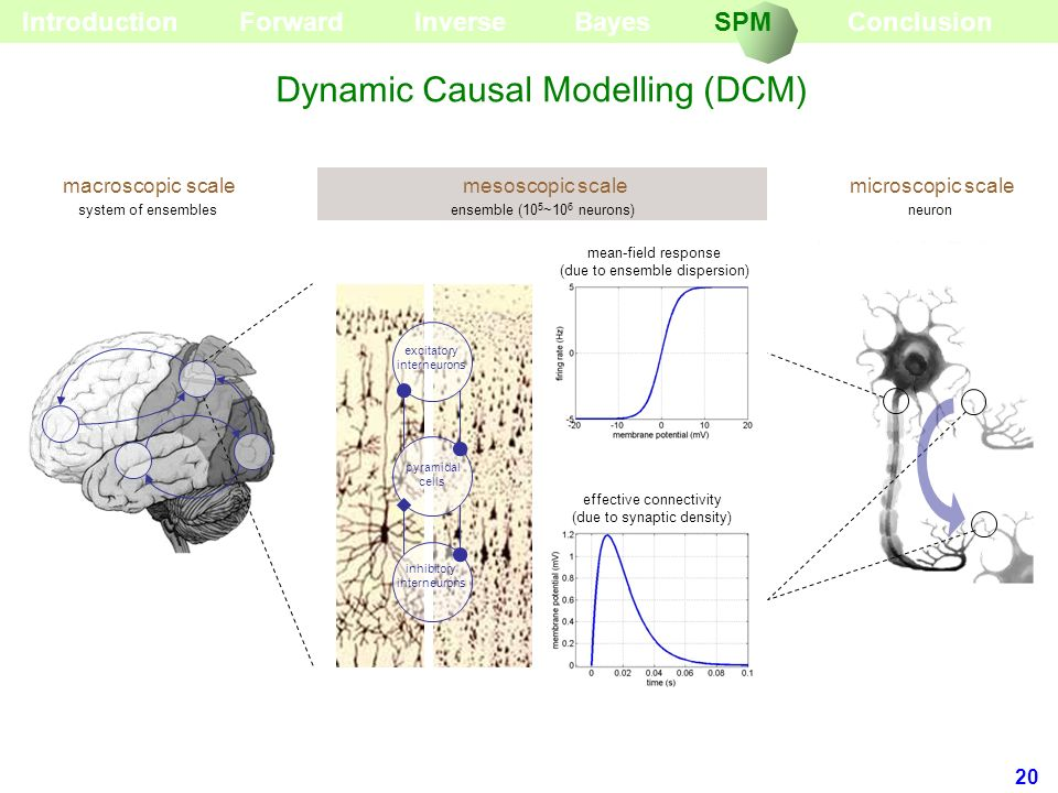 Dynamic Causal Modelling (DCM)