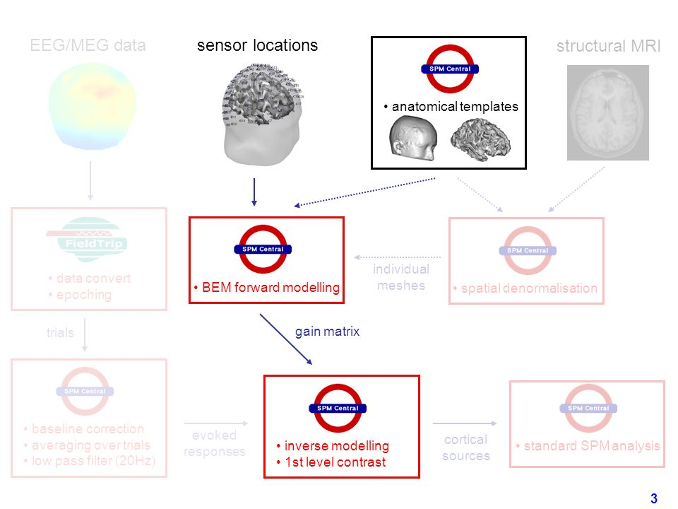 EEG/MEG data sensor locations structural MRI standard SPM analysis