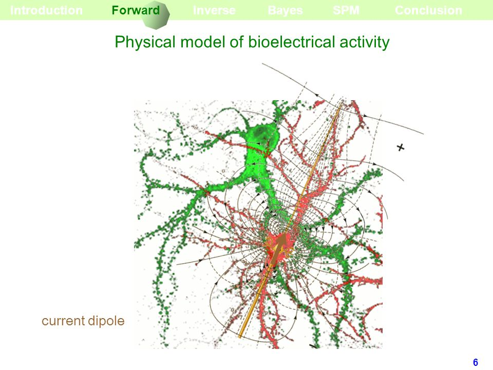 Physical model of bioelectrical activity