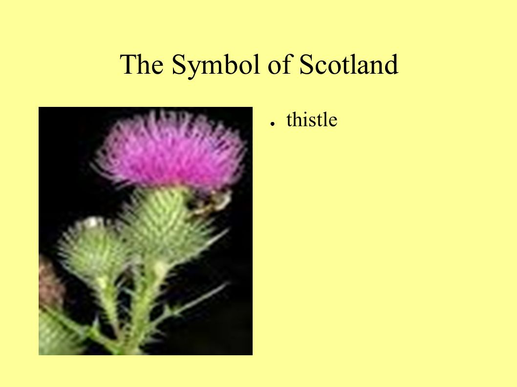 Scotland Ppt Video Online Download