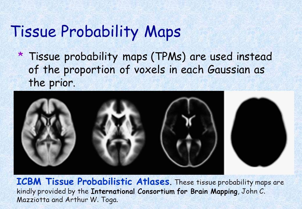 Tissue Probability Maps