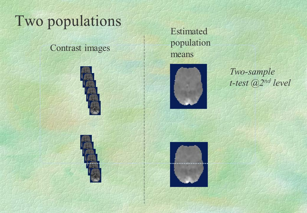 Two populations Estimated population means Contrast images Two-sample