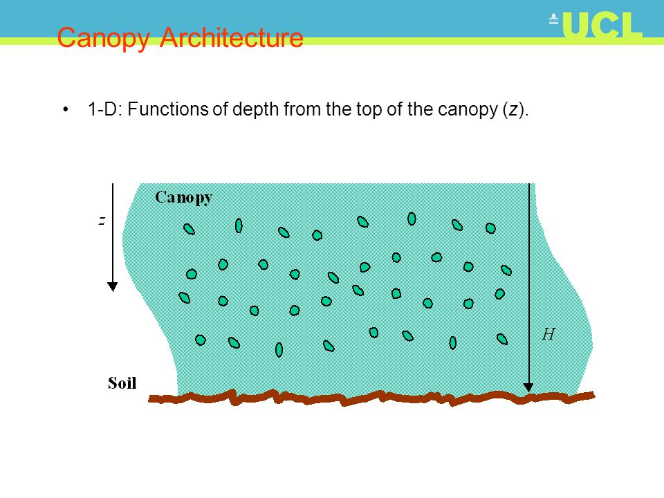 Canopy Architecture 1-D: Functions of depth from the top of the canopy (z).
