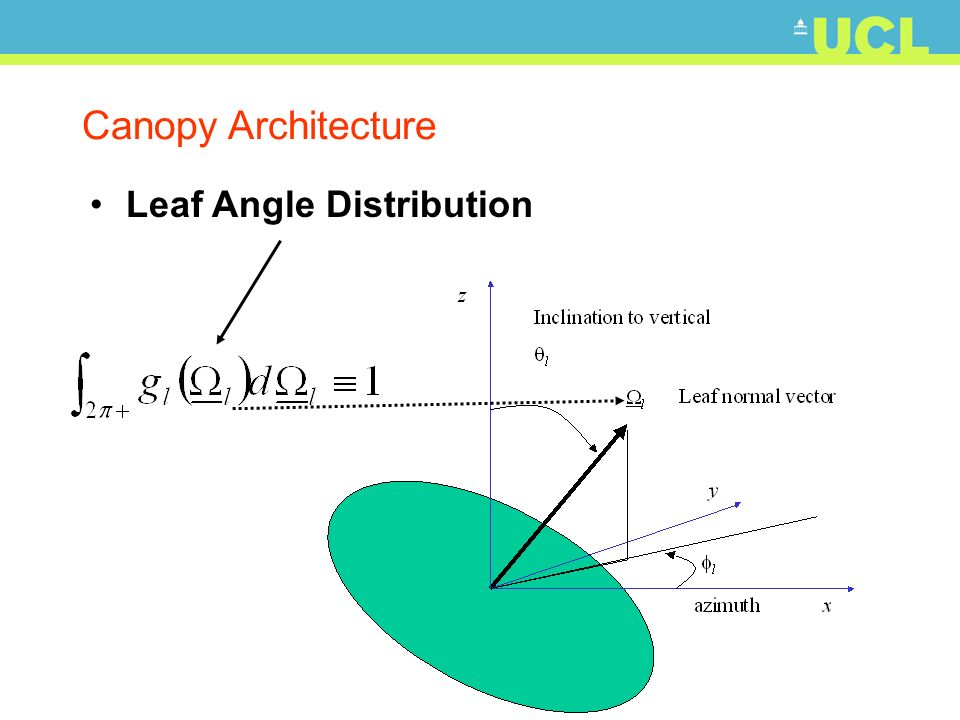 Canopy Architecture Leaf Angle Distribution