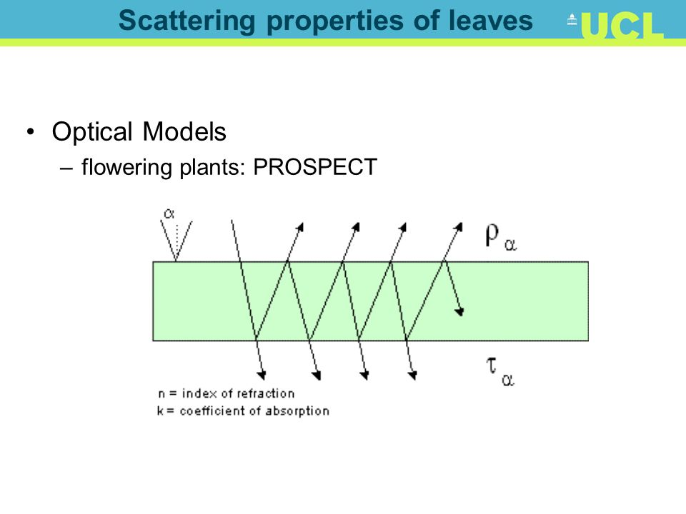 Scattering properties of leaves
