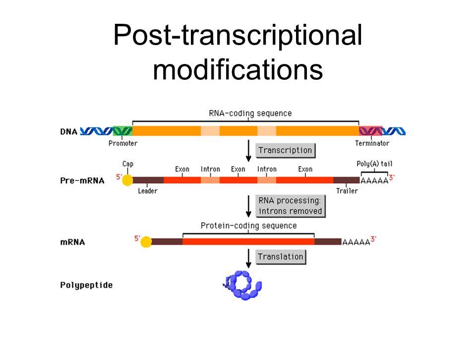 Post-transcriptional modifications