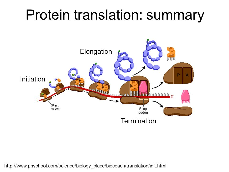 Protein translation: summary