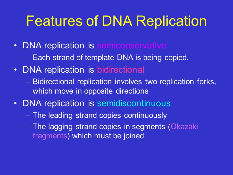 Features of DNA Replication