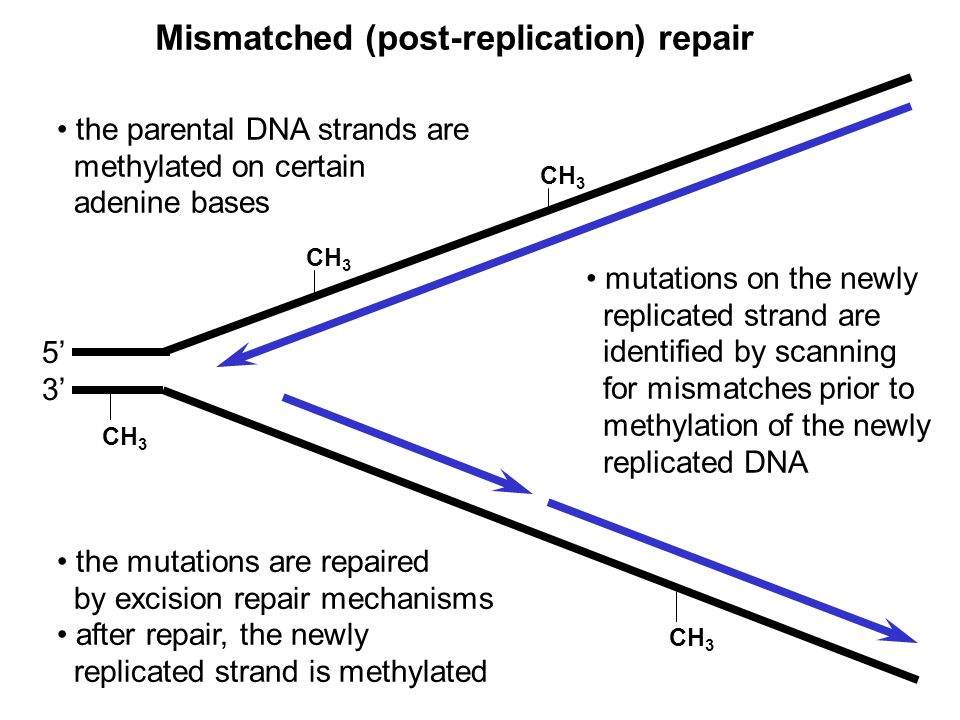 Mismatched (post-replication) repair
