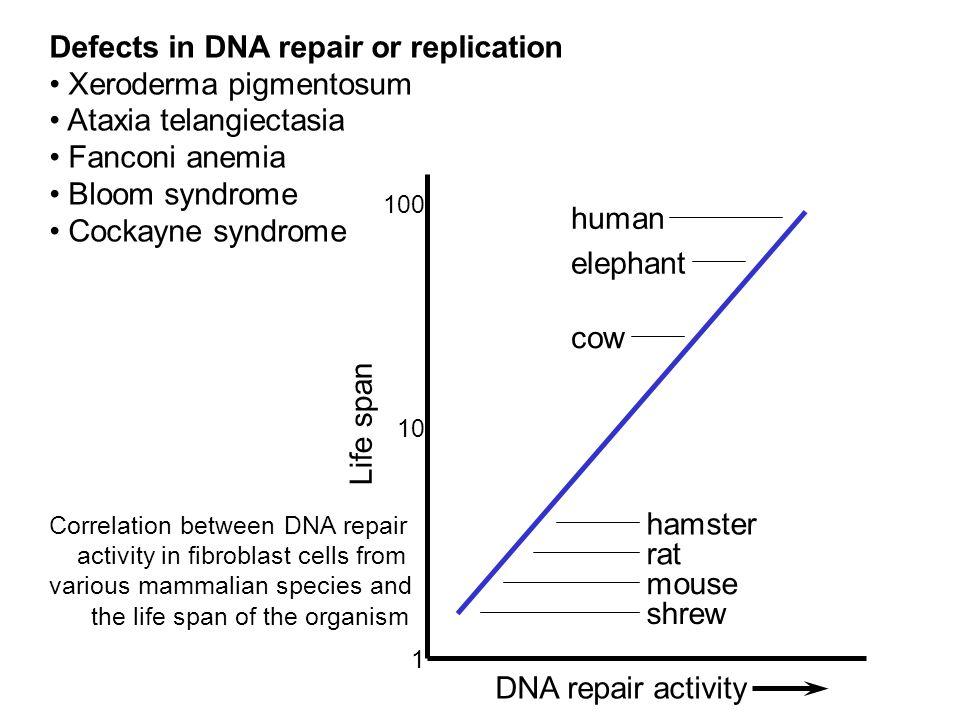 Defects in DNA repair or replication Xeroderma pigmentosum
