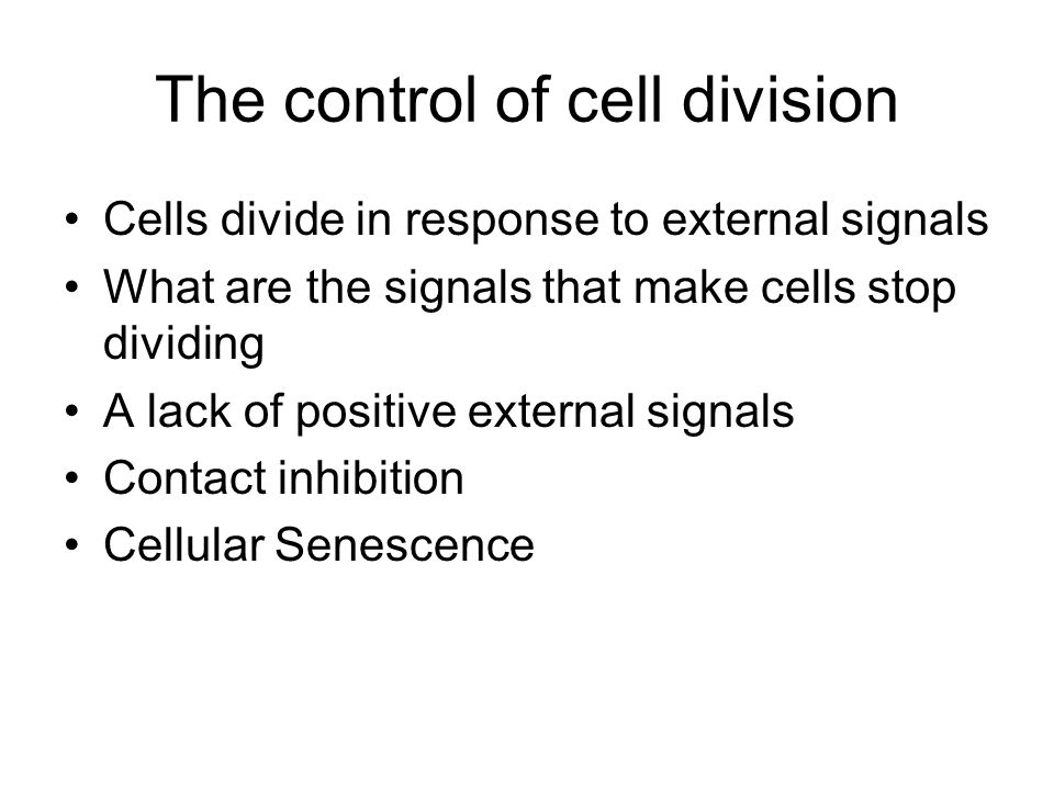 The control of cell division