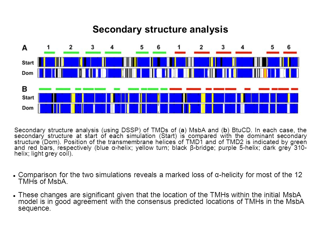 Secondary structure analysis