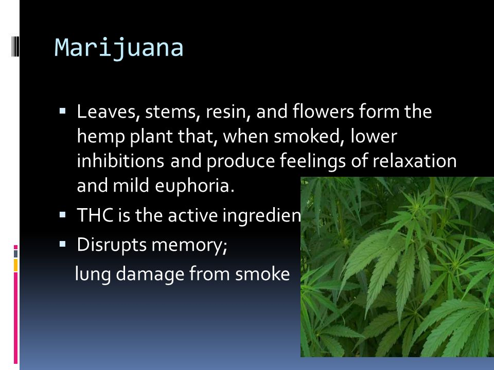 How Does Marijuana Affect You?