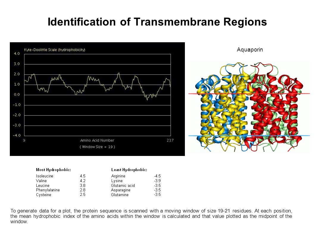 Identification of Transmembrane Regions