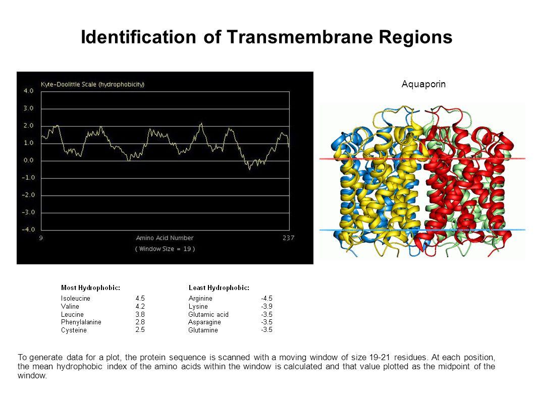 Identification of Transmembrane Regions