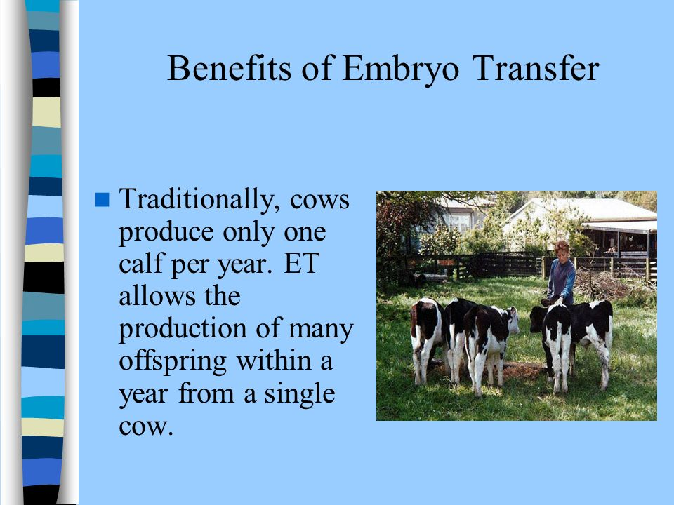 embryo transfer technology in cattle