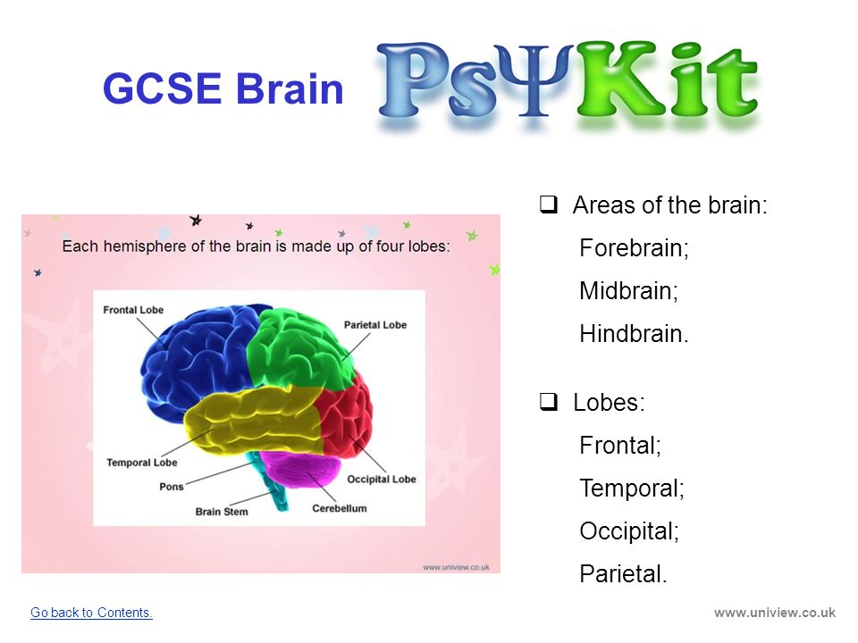 GCSE Brain Areas of the brain: Forebrain; Midbrain; Hindbrain. Lobes: