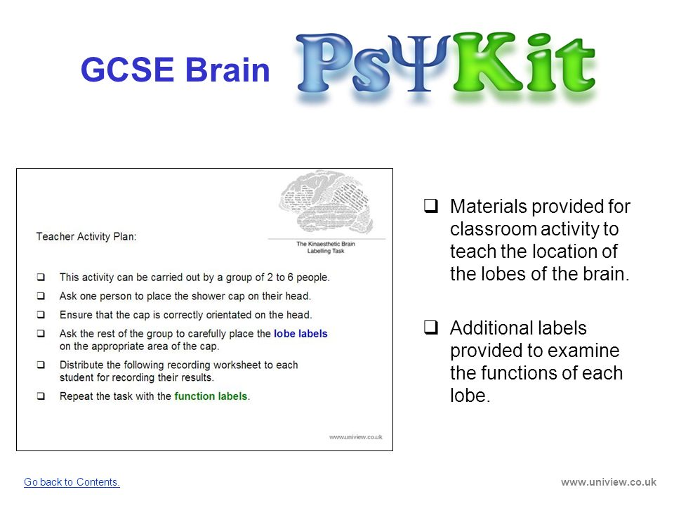 GCSE Brain PsyKit GCSE Brain. Materials provided for classroom activity to teach the location of the lobes of the brain.
