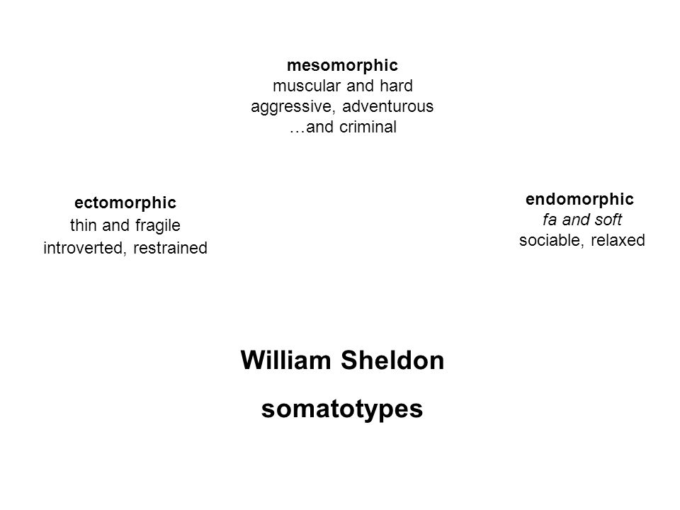 William Sheldon somatotypes