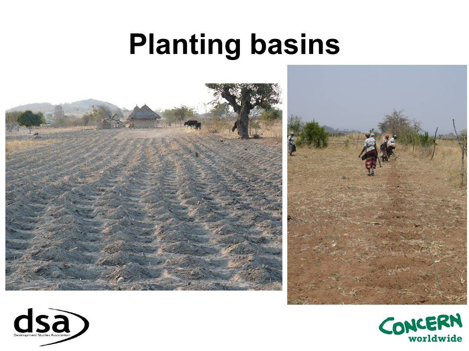 Planting basins