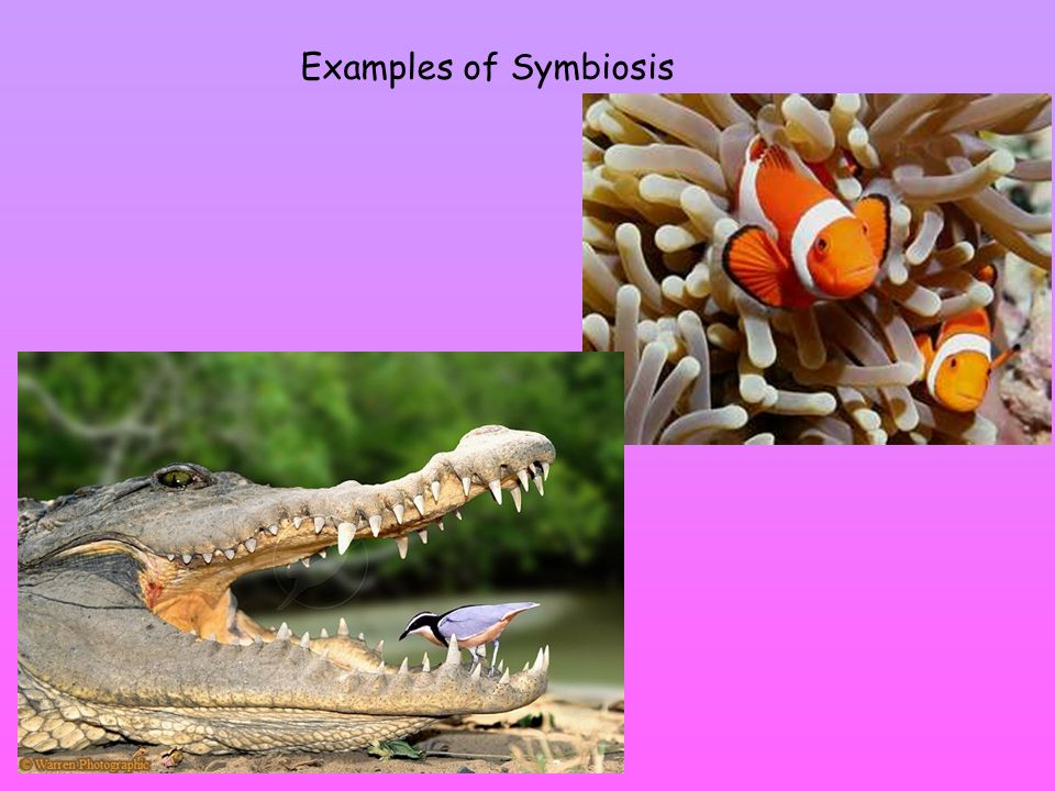 ecosystems an ecosystem is made of all the living