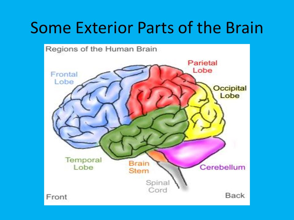 the brain the black hole in education ppt download On exterior brain