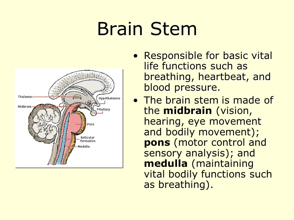 psychology brain and vital body functions You need not memorize these structures for an introductory psychology and organize distant body brain stem controls vital functions such as.