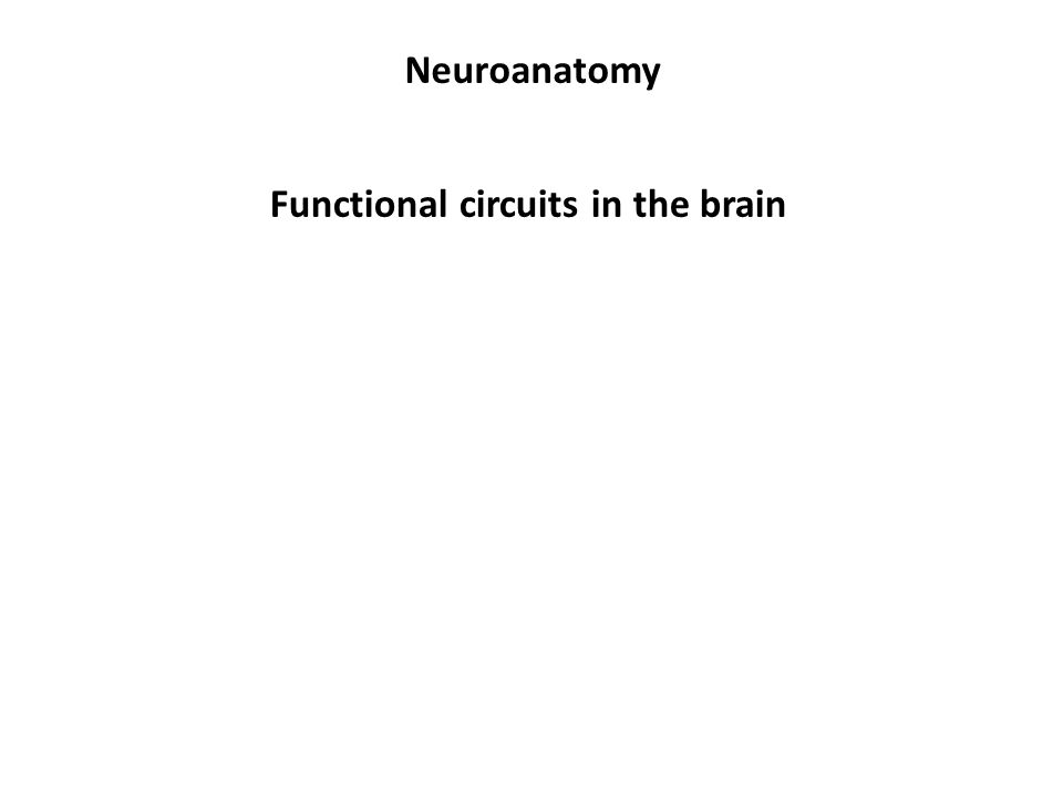 Neuroanatomy Functional circuits in the brain