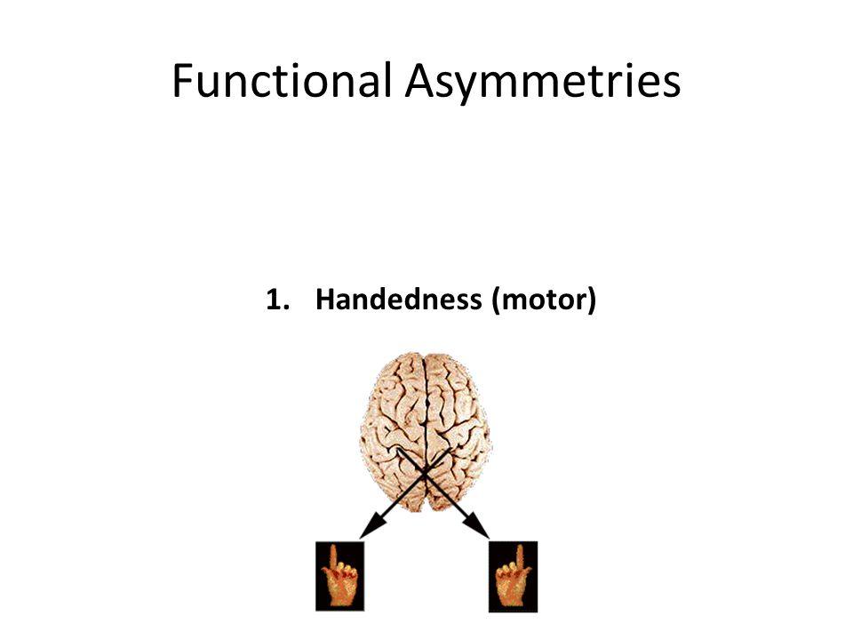Functional Asymmetries