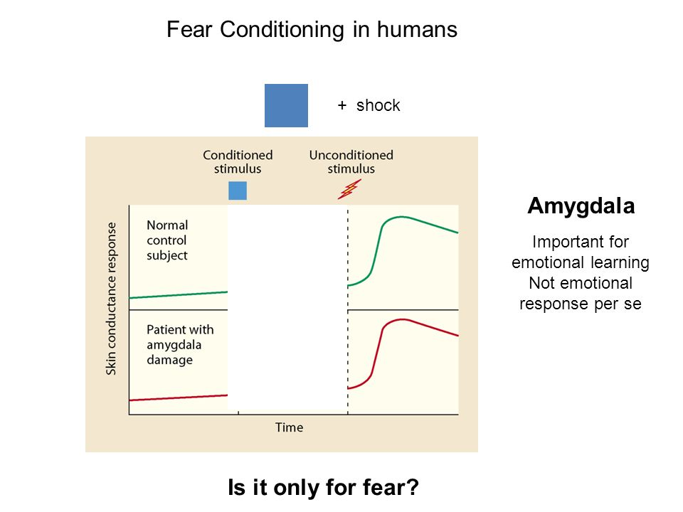 Fear Conditioning in humans
