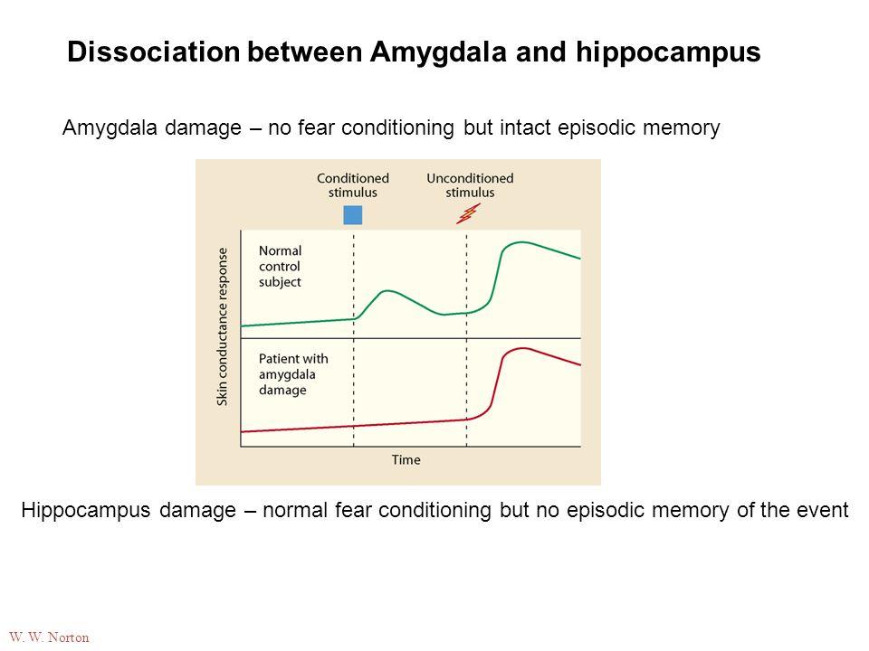 Amygdala damage – no fear conditioning but intact episodic memory