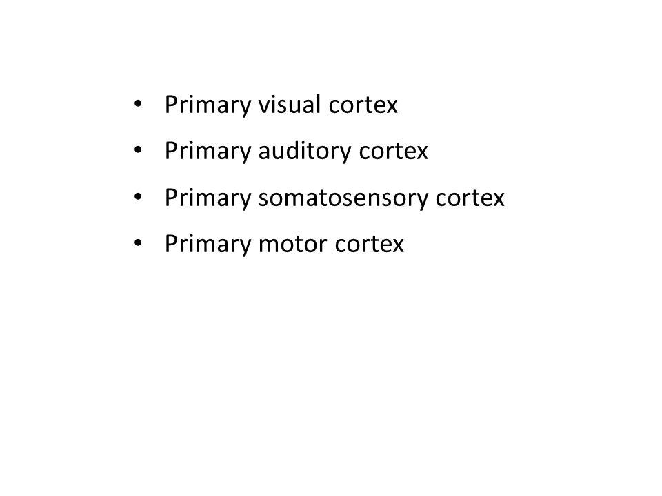 Primary visual cortex Primary auditory cortex Primary somatosensory cortex Primary motor cortex
