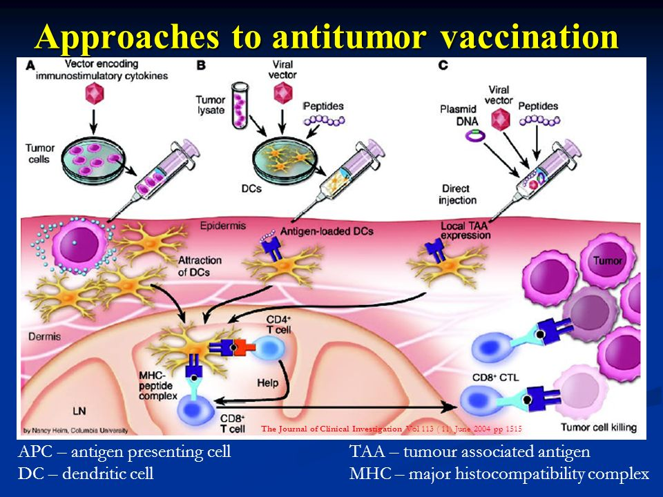 Approaches to antitumor vaccination