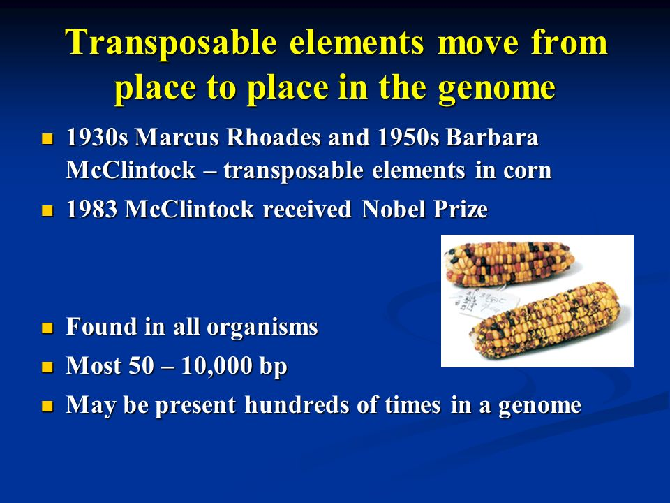 Transposable elements move from place to place in the genome