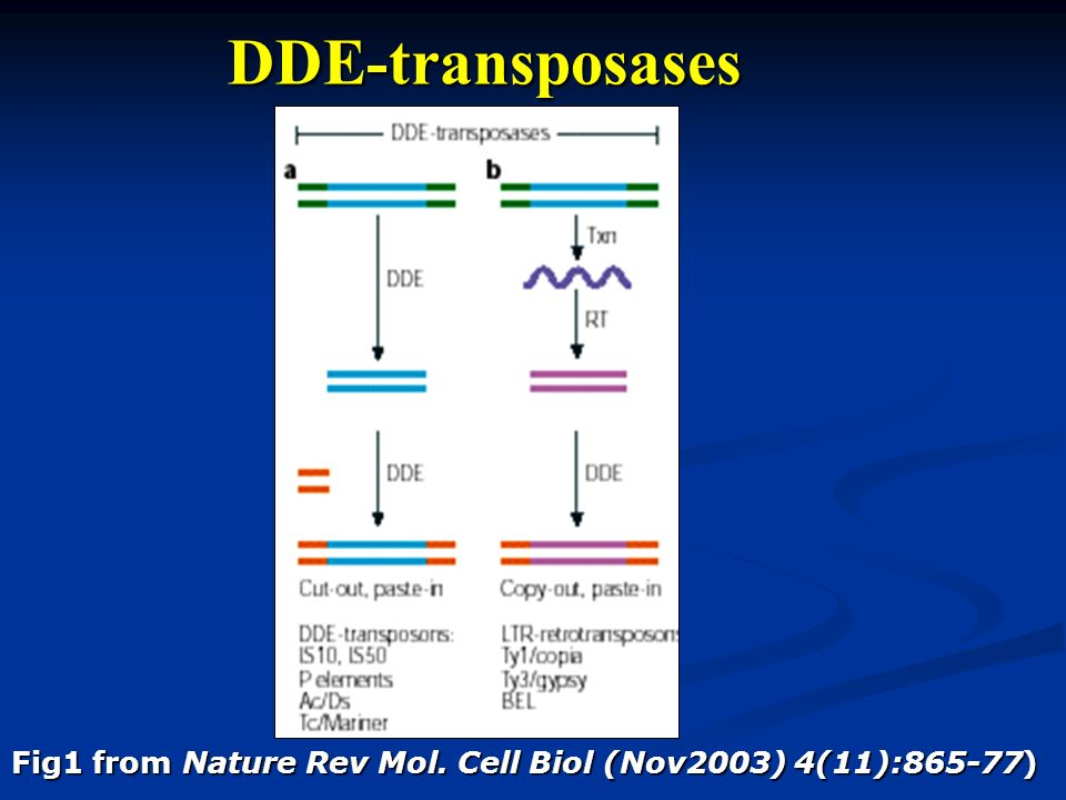 DDE-transposases Fig1 from Nature Rev Mol. Cell Biol (Nov2003) 4(11):865-77)