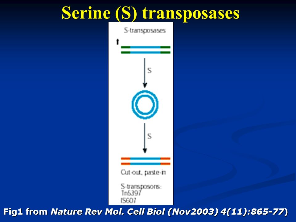 Serine (S) transposases