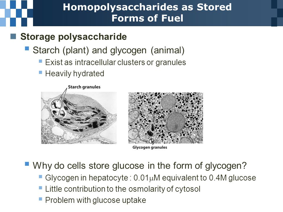 Carbohydrates and Glycobiology - ppt video online download