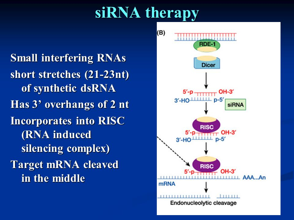 siRNA therapy Small interfering RNAs