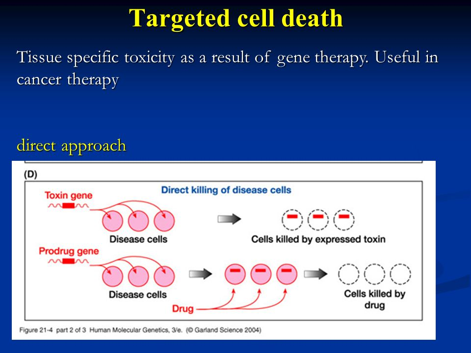 Targeted cell death Tissue specific toxicity as a result of gene therapy. Useful in cancer therapy.