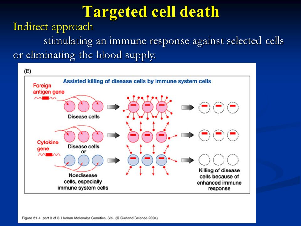 Targeted cell death Indirect approach