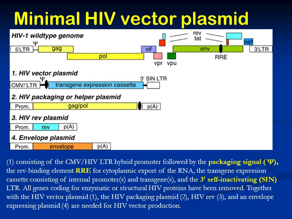 Minimal HIV vector plasmid