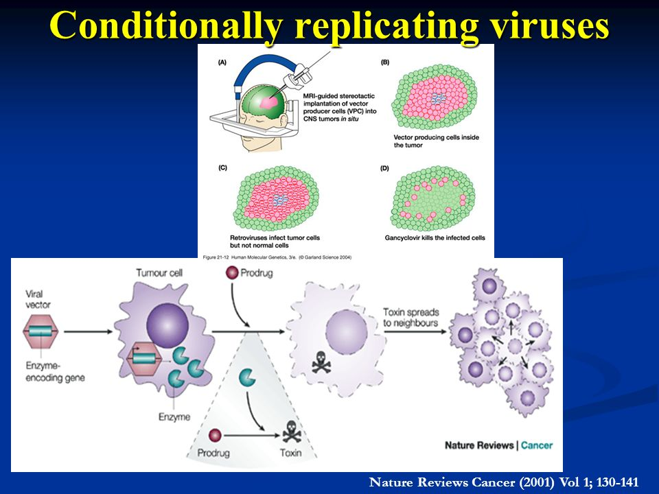 Conditionally replicating viruses