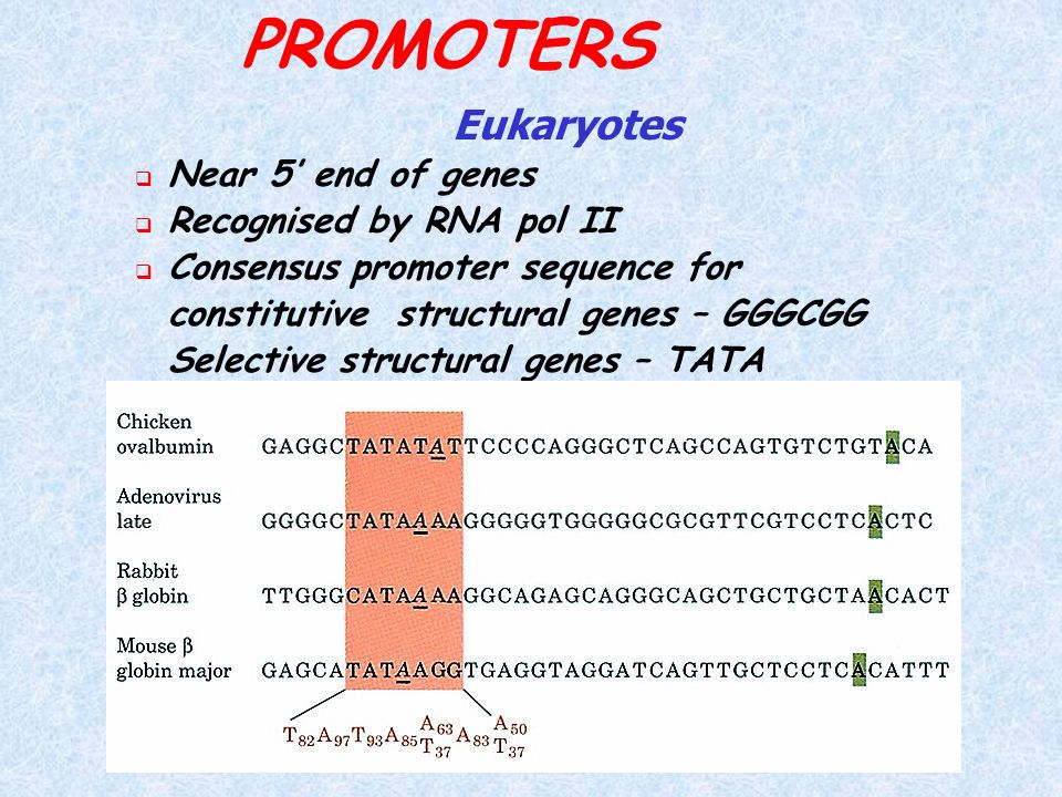 PROMOTERS Eukaryotes Near 5' end of genes Recognised by RNA pol II