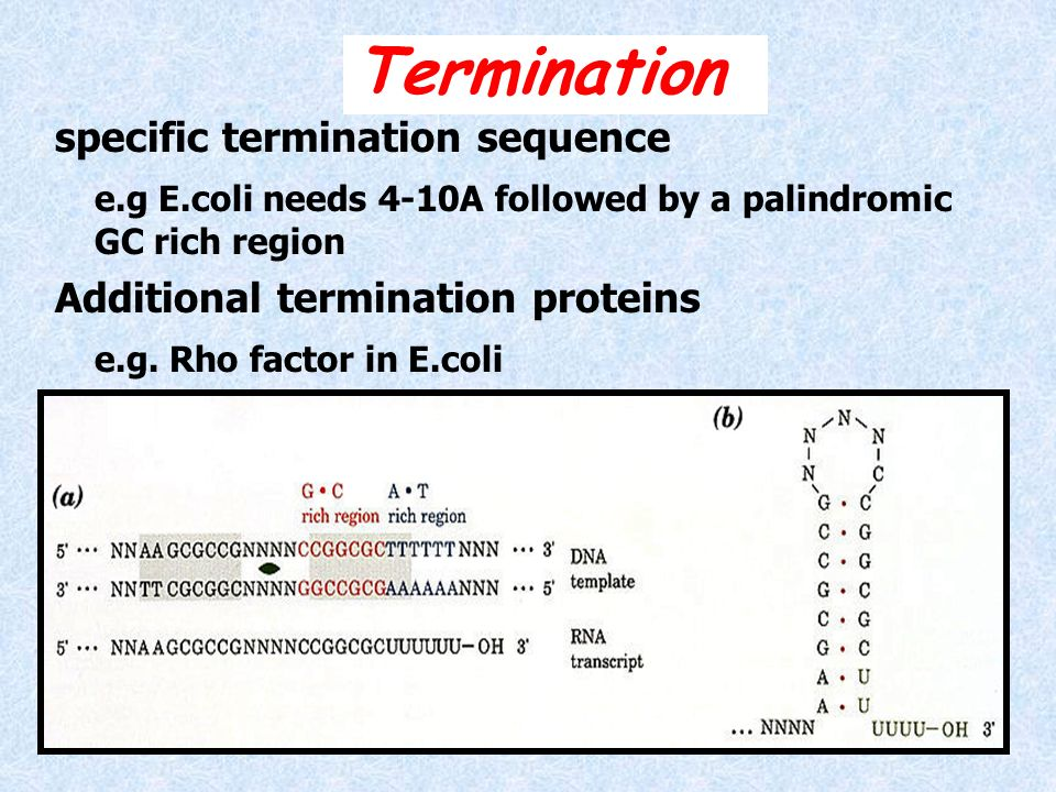Termination specific termination sequence